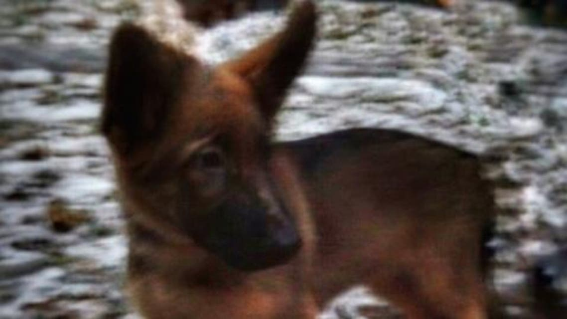 Russian police dog france paris attacks (Photo courtesy: Russian Ministry of Internal Affairs)