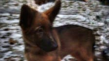 Russia gives France a puppy to replace police dog killed by militants