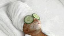 Belgians tweet cat photos amid #BrusselsLockdown