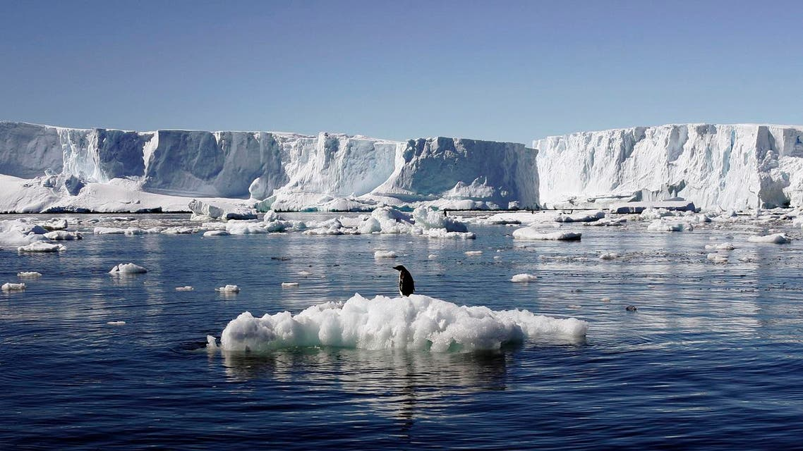 An Adelie penguin stands atop a block of melting ice near the French station at Dumont d'Urville in East Antarctica. (File photo: Reuters)