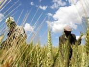 36 مليون دولار لدعم مشاريع الزراعة بـ 7 محافظات يمنية