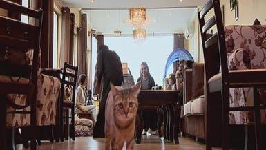 #كيف_تجني_المال.. مقهى للقطط في دبي