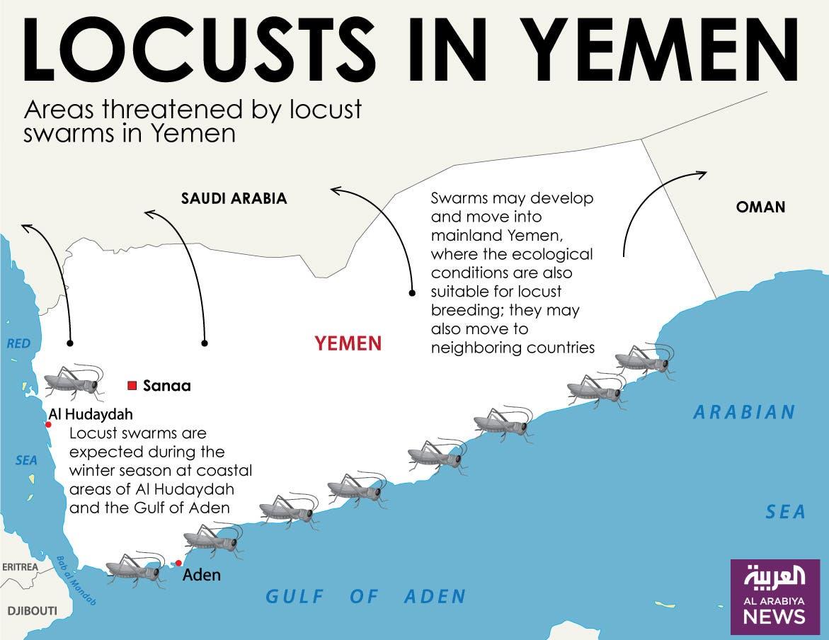 Infographic: Locusts in Yemen