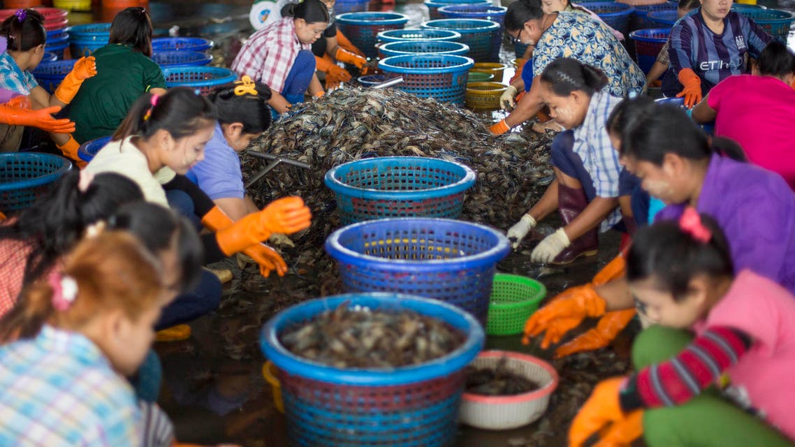 In this Thursday, Sept. 3, 2015 photo, female workers, wearing a yellow-white cosmetic paste known as thanka on their cheeks, sort shrimp at a seafood market in Mahachai, Thailand. Shrimp is the most-loved seafood in the U.S., with Americans downing 1.3 billion pounds every year, or about 4 pounds per person. Thailand sends nearly half of its supply to the U.S. (AP