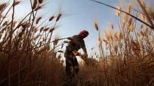 Jordan cancels wheat tender, issues new one