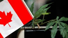 Canada's marijuana industry lights up as legalization loo‎ms