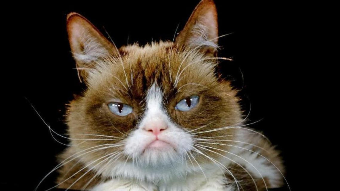 Grumpy Cat posing for a photo during an interview at the Associated Press in Los Angeles. (AP)