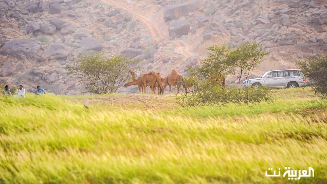 العربية  ترصد ربيع وجمال طبيعة