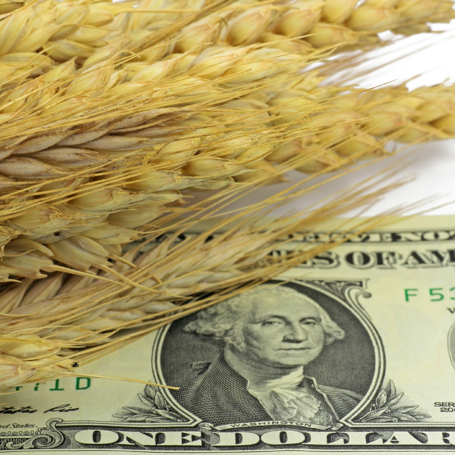 أسعار الغذاء تحقق قفزات مستمرة على مدار 12 شهرا متواصلا