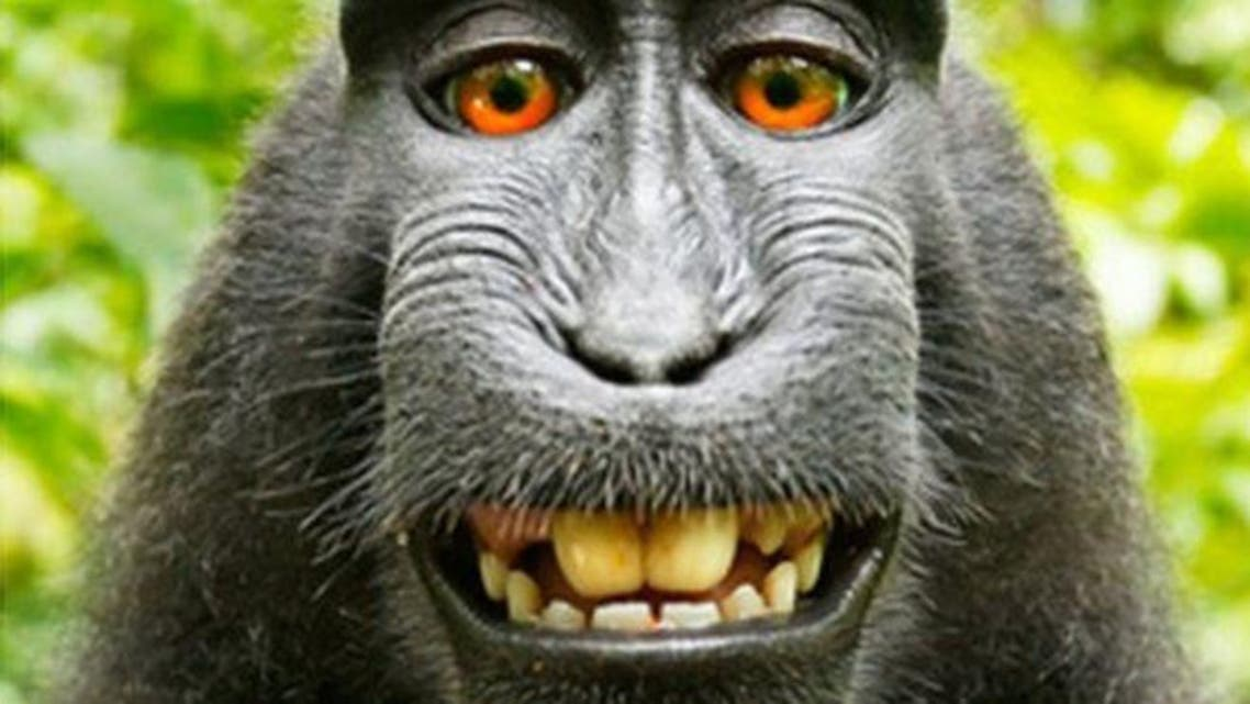Wildlife Personalities/David J Slater