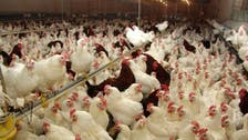 Iraq bans poultry imports from 24 countries over avian flu threat