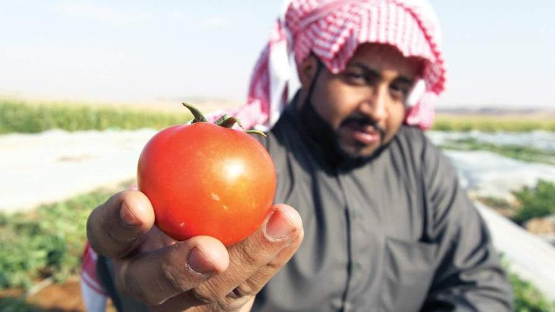 A farmer holds up a freshly harvested tomato on a farm in Al-Kharj, 77 km (48 miles) south of Riyadh. (File photo: Reuters)