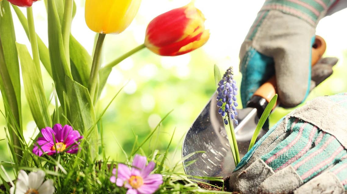 Dubai Gardening is not the same as gardening back home. You have to choose carefully depending on what you want! (Shutterstock)