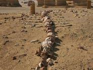 مصر.. أكبر هيكلين عظميين لحوتين عاشا قبل 37 مليون عام