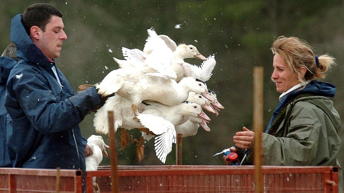 Several countries including Japan and China had already banned French poultry imports as a result of the outbreak. (File photo: AP)