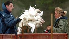 Saudi Arabia suspends French imports over bird flu