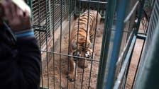 Animals at Gaza's zoos die of hunger, diseases