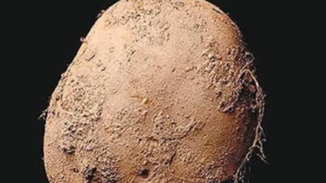 صورة ثمرة البطاطا - مليون دولار