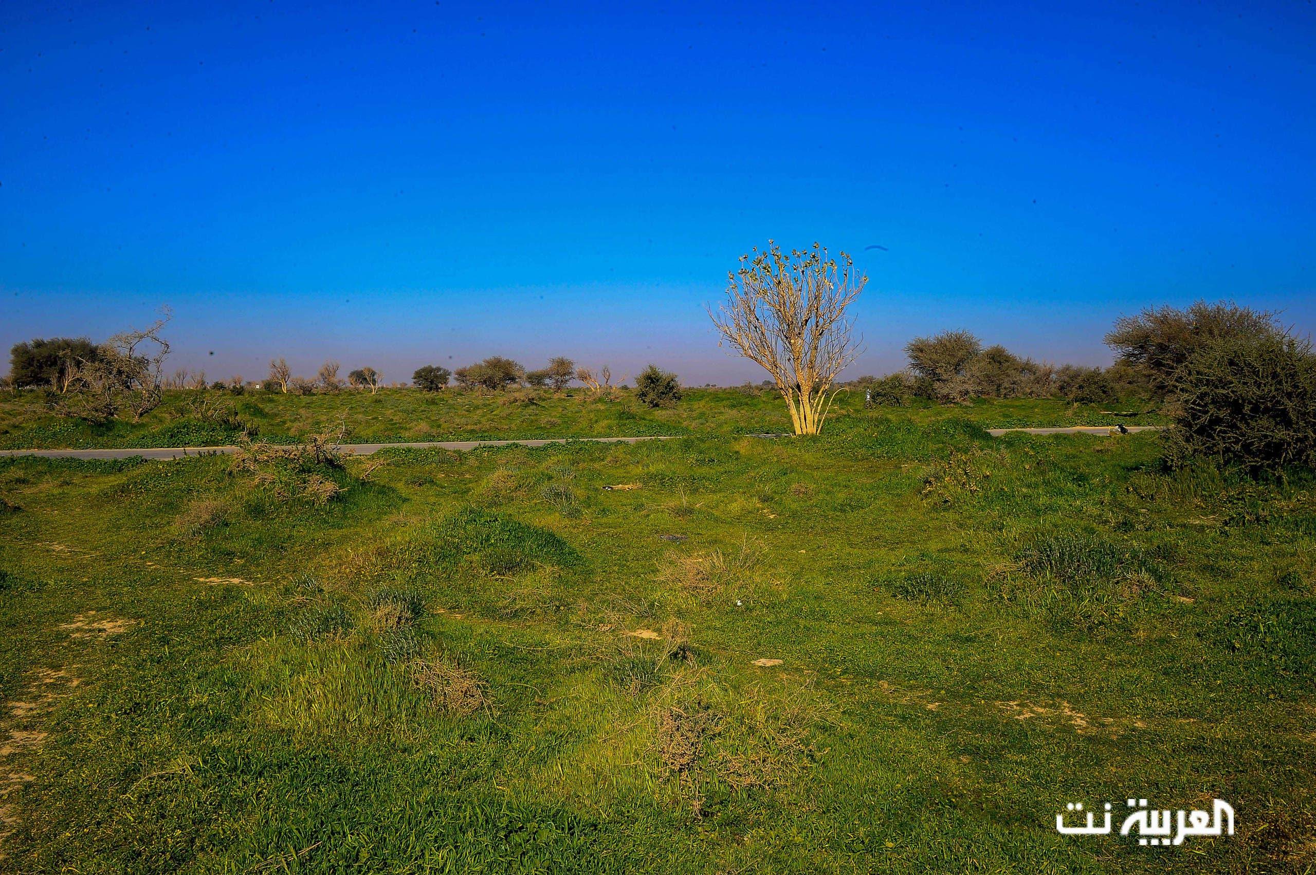 تصوير ظافر البكري