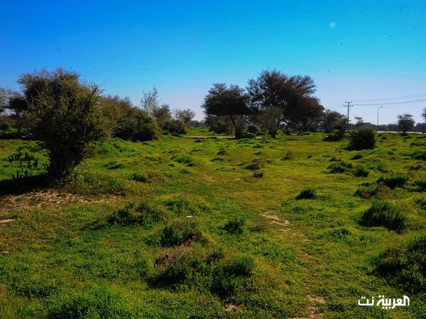 بالصور.. روضة خريم ربيع أخاذ وسط الصحراء