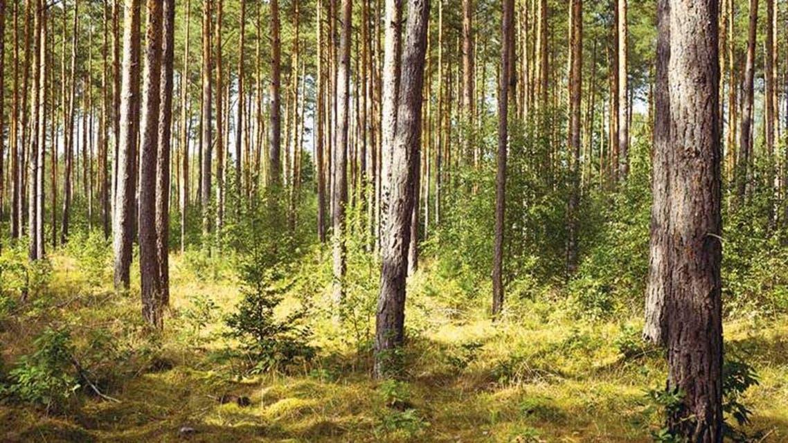 غابة غابات