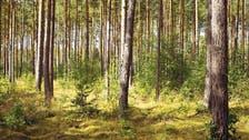 صدق أو لا تصدق.. كثرة الغابات مضرة بالبيئة!