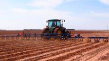 U.S. cotton imports damaging Turkish production: probe