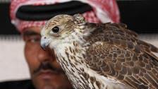 Royal kidnap casts spotlight on Gulf 'sport of kings': Hunting houbara