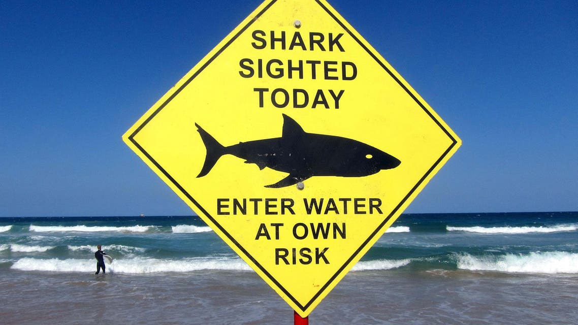 A surfer carries his board into the water next to a sign declaring a shark sighting on Sydney's Manly Beach, Australia, in this file photo taken November 24, 2015.