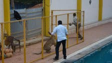 130 schools shut in India's Bangalore after 'leopard sighting'