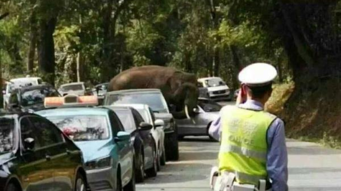 فيل غاضب