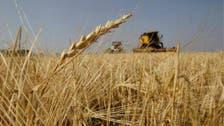 Iraq grain board chief to be investigated in graft case: Ministry