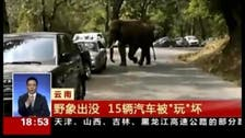 They never forget? Heartbroken Chinese elephant crushes cars