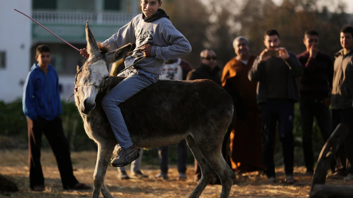 Jumping Egyptian donkey leaps to fame