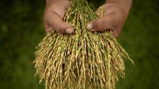 DNA rice breakthrough raises 'green revolution' hopes