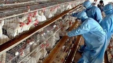 اكتشاف أنفلونزا الطيور لأول مرة في المغرب