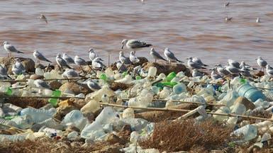 غرينبيس تحذر: خطة لبنان لمعالجة النفايات خطيرة
