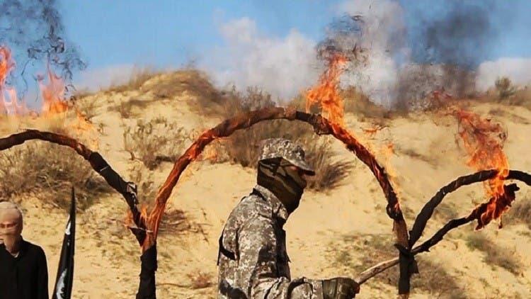 عوامل داعش در سینا