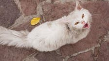 'Kunkush' the cat reunited with Iraqi refugee family after epic journey