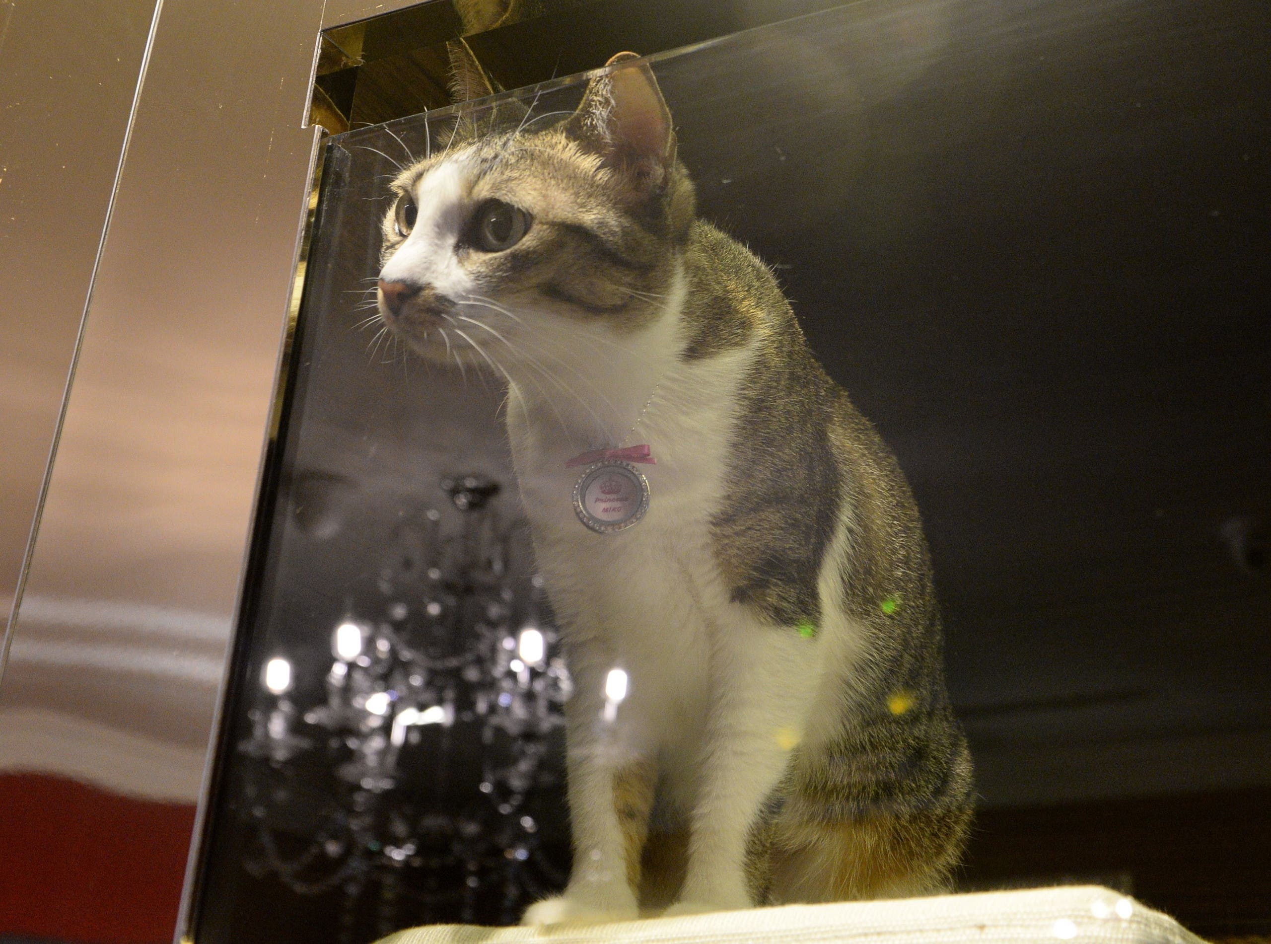 A pet cat looks out from its enclosure at the hotel (AFP)
