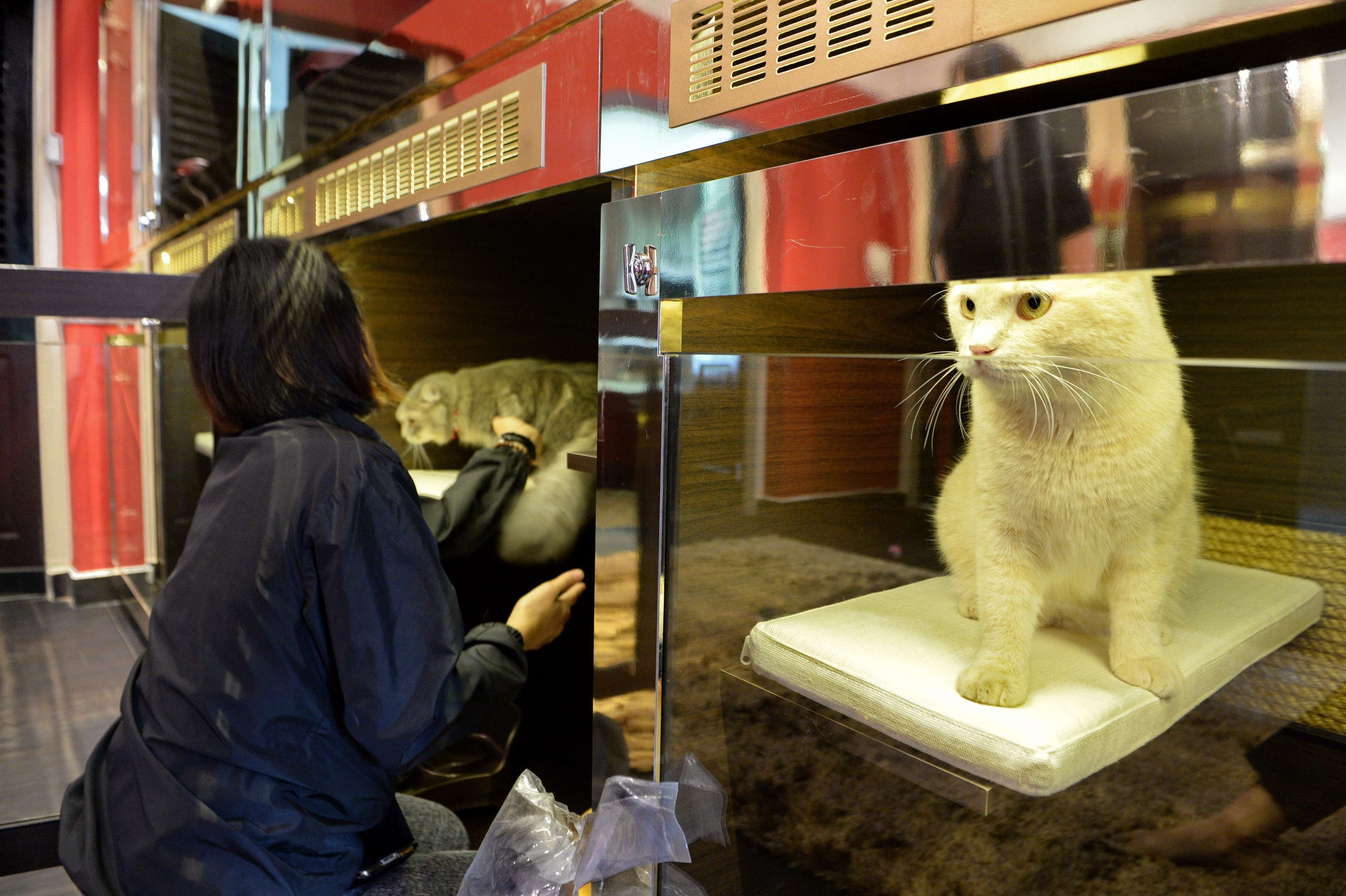 A staff member places a pet cat in its Purrfection Suite at the Wagington luxury pet hotel in Singapore on February 24, 2016. (AFP)