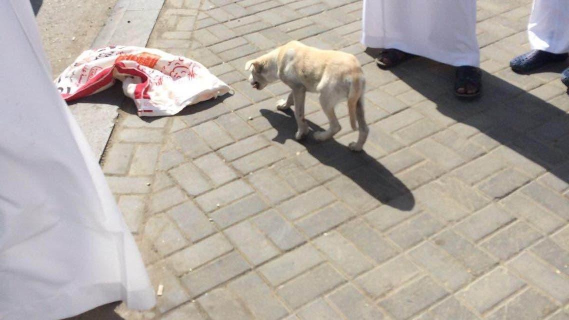 القبض على باكستاني حاول تهريب كلب لذبحه بمطعم بالمجاردة