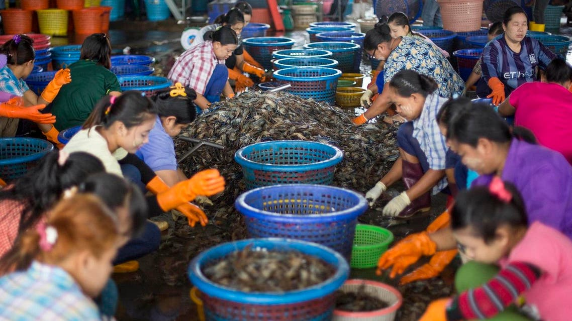 In this Thursday, Sept. 3, 2015 photo, female workers, wearing a yellow-white cosmetic paste known as thanka on their cheeks, sort shrimp at a seafood market in Mahachai, Thailand. Shrimp is the most-loved seafood in the U.S., with Americans downing 1.3 billion pounds every year, or about 4 pounds per person. Thailand sends nearly half of its supply to the U.S. (AP)