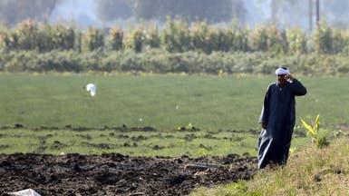 هل ستواجه مصر أزمة أرز؟ مسؤول يجيب