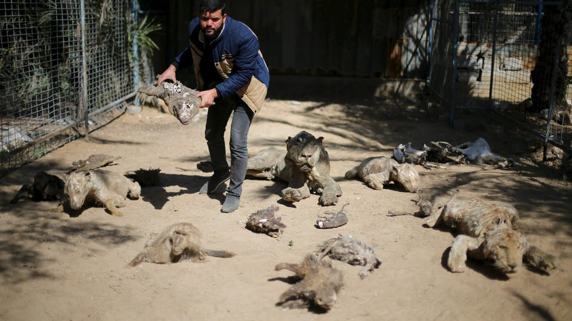 Palestinian Mohammad Oweida, a zoo owner, shows stuffed animals that died during the 2014 war, in Khan Younis in the southern Gaza Strip March 7, 2016. REUTERS