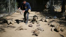Starving animals up for sale at Gaza zoo