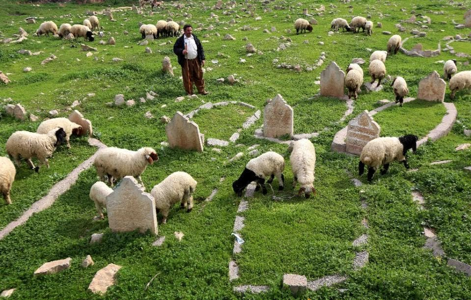 An Iraqi shepherd herds sheep in a cemetery on the banks of the Tigris River in the village of Wana, some 10 kms south of the Mosul Dam (AFP)