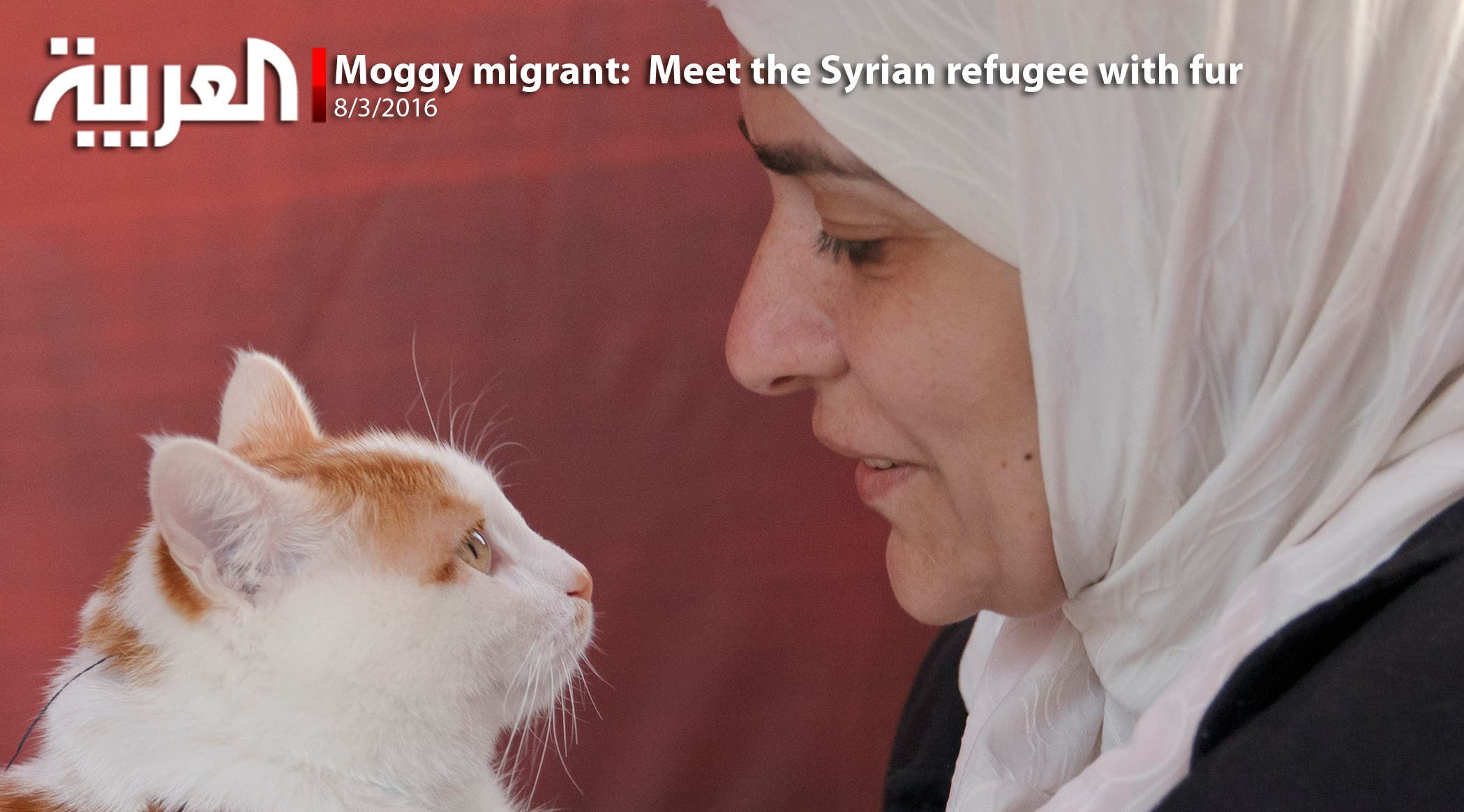Moggy migrant:  Meet the Syrian refugee with fur