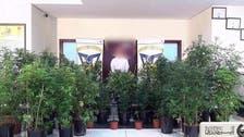 Dubai police raid Emirati man's 'sophisticated' marijuana nursery