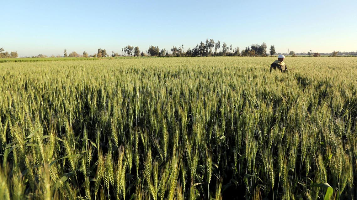 egypt wheat reuters